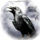 the_crow297