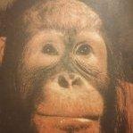 Monkey_master